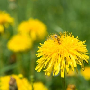 Yellow-36