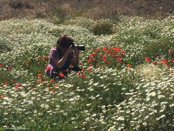 ladybird, earth, exploring, daniela, mühlheim, danielamühlheim, nature, photography, travel