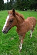 A particular curious foal