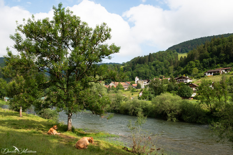 ladybird, earth, exploring, daniela, mühlheim, danielamühlheim, nature, photography, travel,