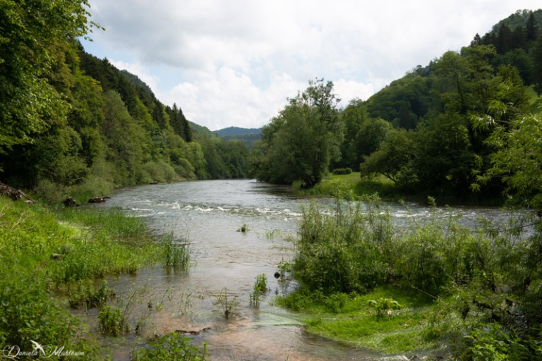 ladybird, earth, exploring, daniela, mühlheim, danielamühlheim, nature, photography, travel, switzerland