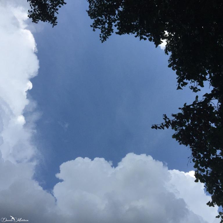 Tree, cloud and blue sky