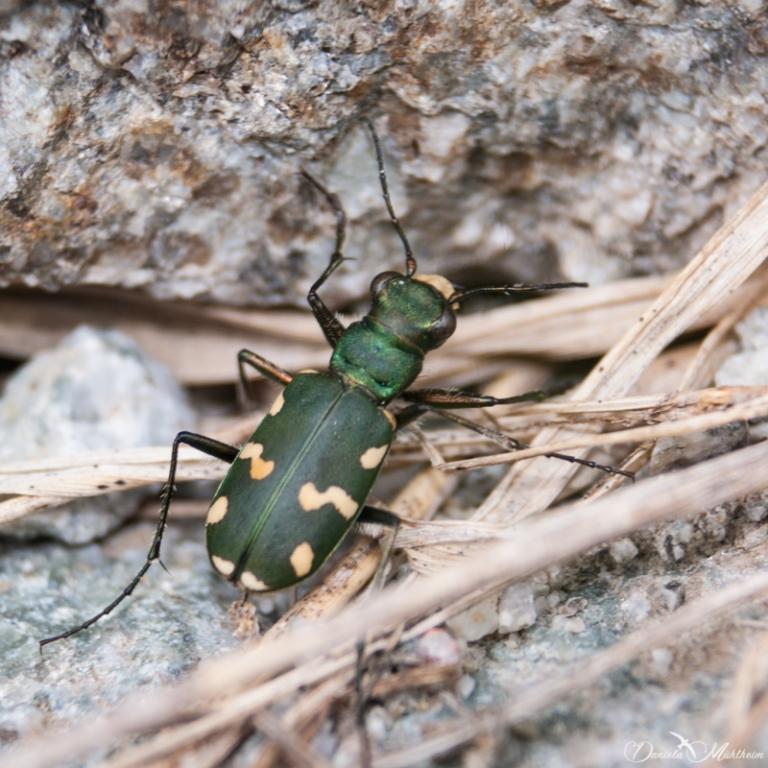 ladybird, earth, exploring, daniela, mühlheim, danielamühlheim, nature, photography, travel, Switzerland, insect, beetle