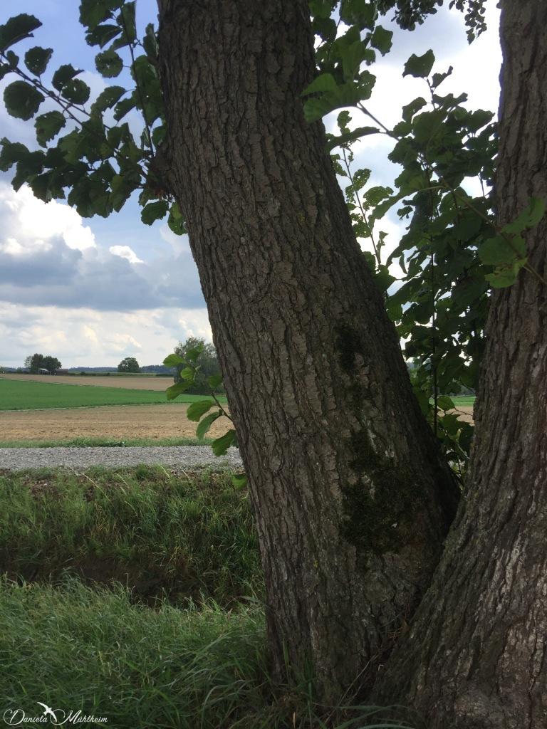 beautiful tree close up