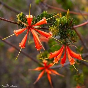 nature, ladybird, photography, explore, earth, danielamuehlheim, daniela, mühlheim, australia, flower