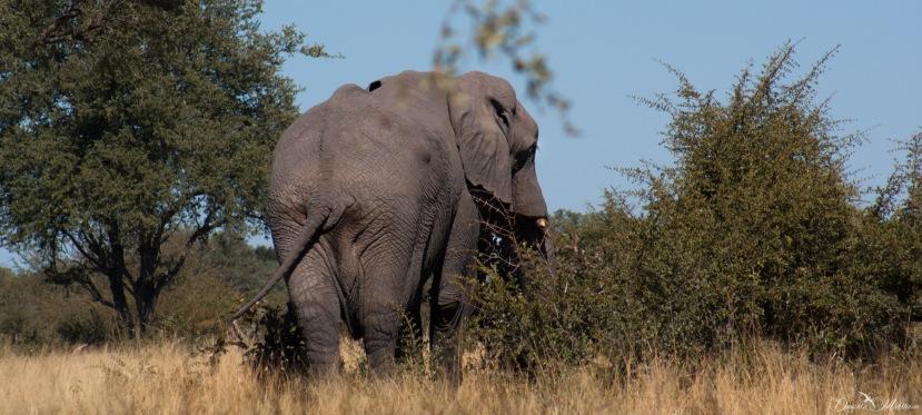 In memory of the elephants killed inBotswana