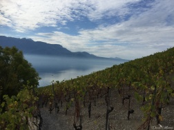 A stroll in the Lavaux 19