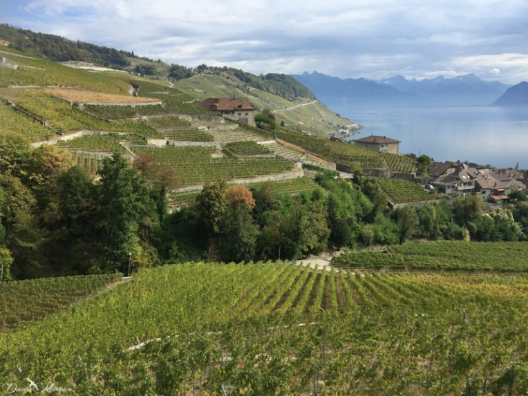 A stroll in the Lavaux 36