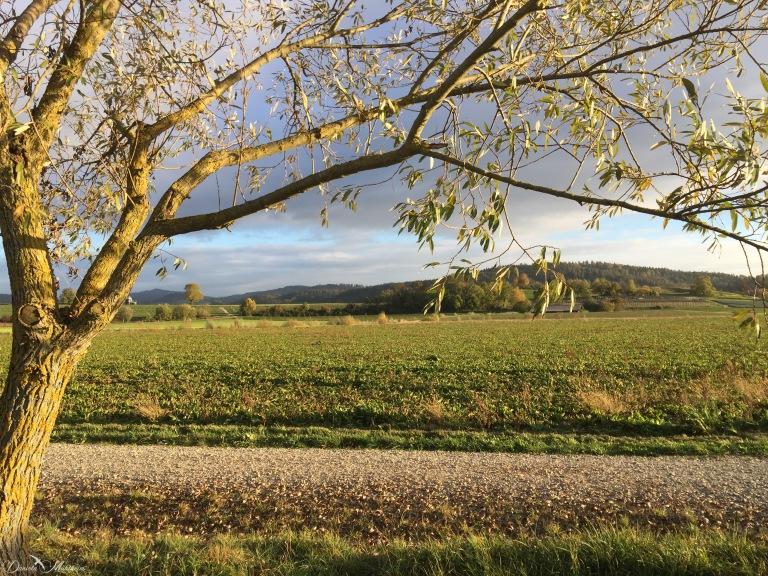 daniela, mühlheim, danielamühlheim, ladybird, explore, abundance, earth, nature, photography