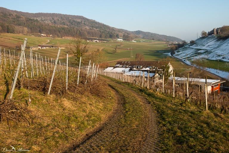 daniela, danielamuehlheim, mühlheim, ladybird, exploring, earth, abundance, nature,