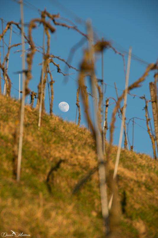 daniela, danielamuehlheim, mühlheim, ladybird, exploring, earth, abundance, nature, agriculture, vine, grapevine, wine