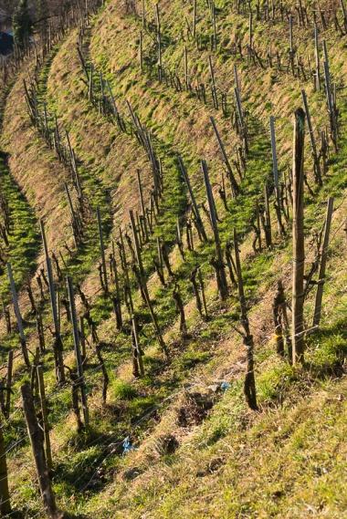 daniela, danielamuehlheim, mühlheim, ladybird, exploring, earth, abundance, nature, grapevine, agriculture, vine, wine