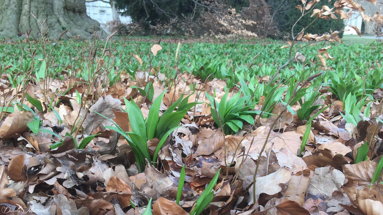 daniela, danielamuehlheim, mühlheim, ladybird, exploring, earth, abundance, nature, flower, spring