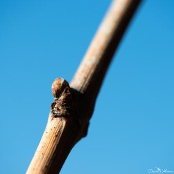 daniela, danielamuehlheim, mühlheim, ladybird, exploring, earth, abundance, nature, switzerland, grapevines, wine,