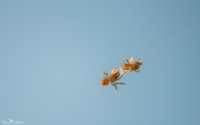 Spiders hanging in the air