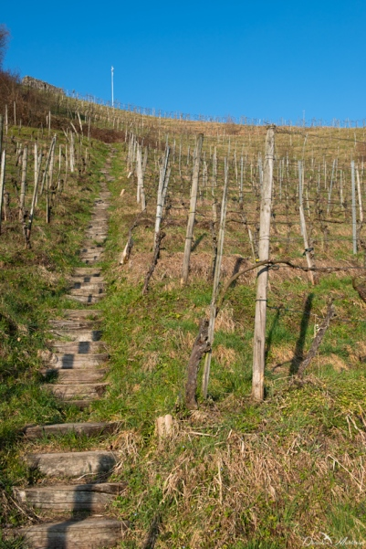 daniela, danielamuehlheim, mühlheim, ladybird, exploring, earth, abundance, nature, switzerland, grapevines, wine, agriculture