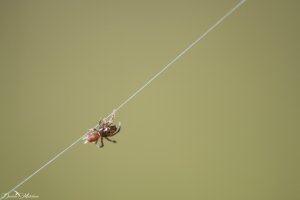 daniela, danielamuehlheim, mühlheim, ladybird, exploring, earth, abundance, nature, switzerland, animal, spider