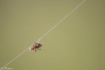 daniela, danielamuehlheim, mühlheim, ladybird, exploring, earth, abundance, nature, switzerland, animal, spider