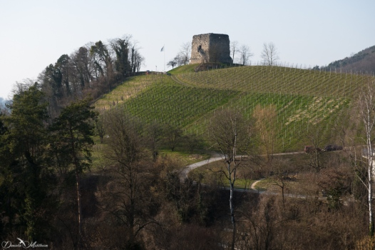 daniela, danielamuehlheim, mühlheim, ladybird, exploring, earth, abundance, nature, switzerland, grapevines, wine