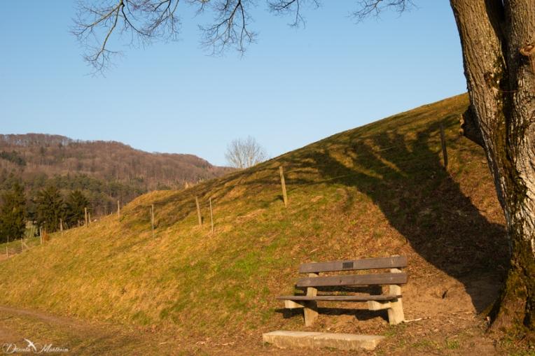 daniela, danielamühlheim, muehlheim, ladybird, exploring, earth, abundance,