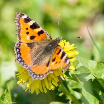 daniela, danielamuehlheim, mühlheim, ladybird, exploring, earth, abundance, nature, switzerland, grapevines, butterfly