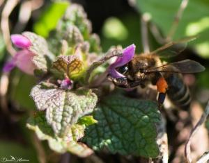 daniela, danielamuehlheim, mühlheim, ladybird, exploring, earth, abundance, nature, switzerland, grapevines, insect, flower