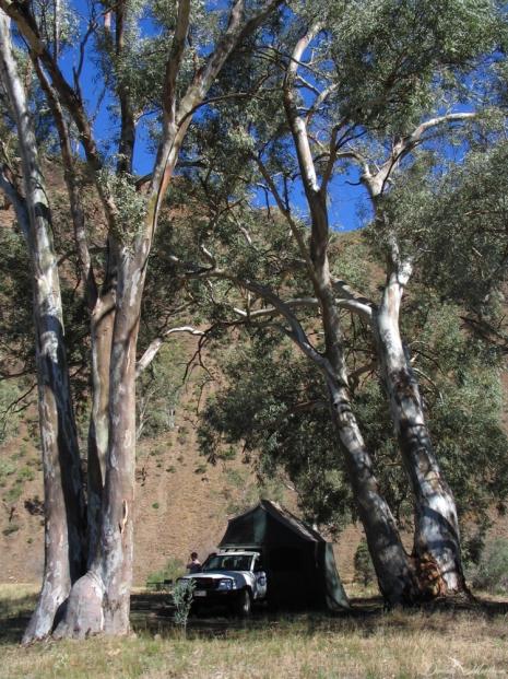 daniela, danielamühlheim, muehlheim, ladybird, exploring, earth, abundance, nature, australia, bushcamping