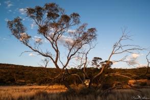 australia, daniela, danielamühlheim, muehlheim, ladybird, exploring, earth, abundance, nature, australia