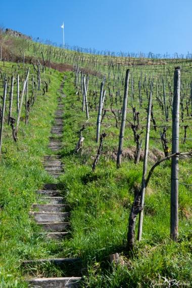 daniela, danielamühlheim, ladybird, nature, abundance, earth, explore, blog, switzerland, grapevine,