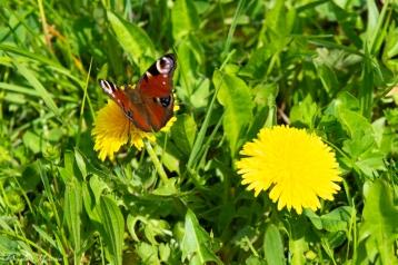 daniela, danielamühlheim, ladybird, nature, abundance, earth, explore, blog, switzerland, grapevine, animal, butterfly