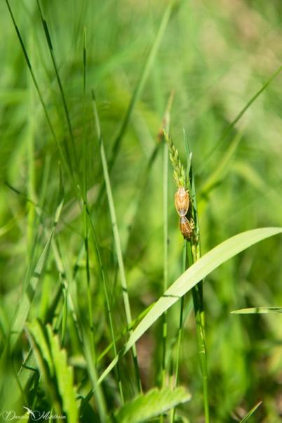 daniela, danielamühlheim, ladybird, nature, abundance, earth, explore, blog, switzerland, grapevine, animal, insect