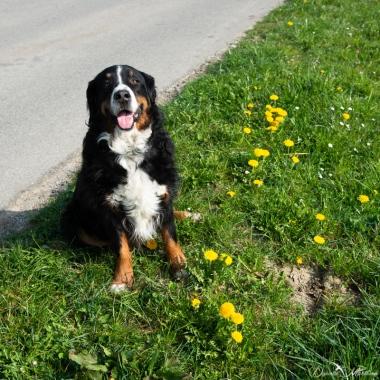 daniela, danielamühlheim, ladybird, nature, abundance, earth, explore, blog, switzerland, grapevine, dog