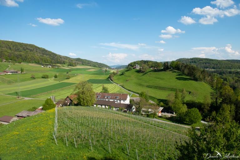 daniela, danielamühlheim, ladybird, nature, abundance, earth, explore, blog, switzerland, grapevine, farm
