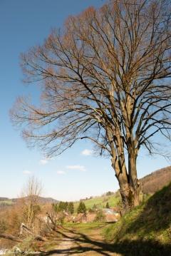 daniela, danielamühlheim, ladybird, nature, abundance, earth, explore, blog, switzerland, grapevine, tree