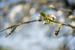 Grapevines April-50