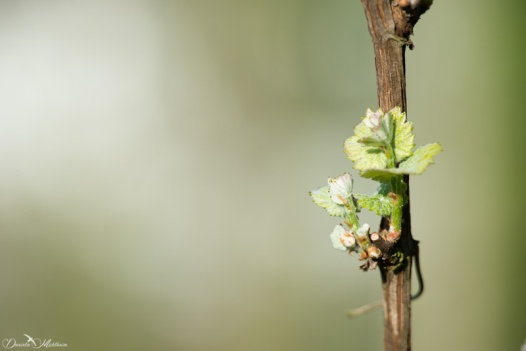 daniela, danielamühlheim, ladybird, nature, abundance, earth, explore, blog, switzerland, grapevine