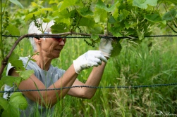 daniela, muehlheim, danielamühlheim, ladybird, exploring, earth, abundance, grapevine, vineyard