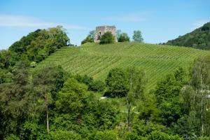 daniela, danielamühlheim, ladybird, nature, abundance, earth, explore, blog, switzerland, grapevine, wine, vineyard, spring
