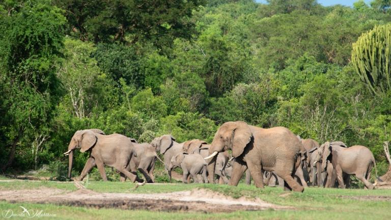 daniela, muehlheim, danielamühlheim, ladybird, exploring, earth, abundance, uganda, animal, elephant