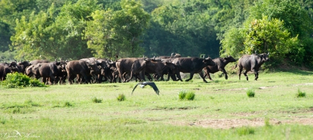 Murchison Falls-46