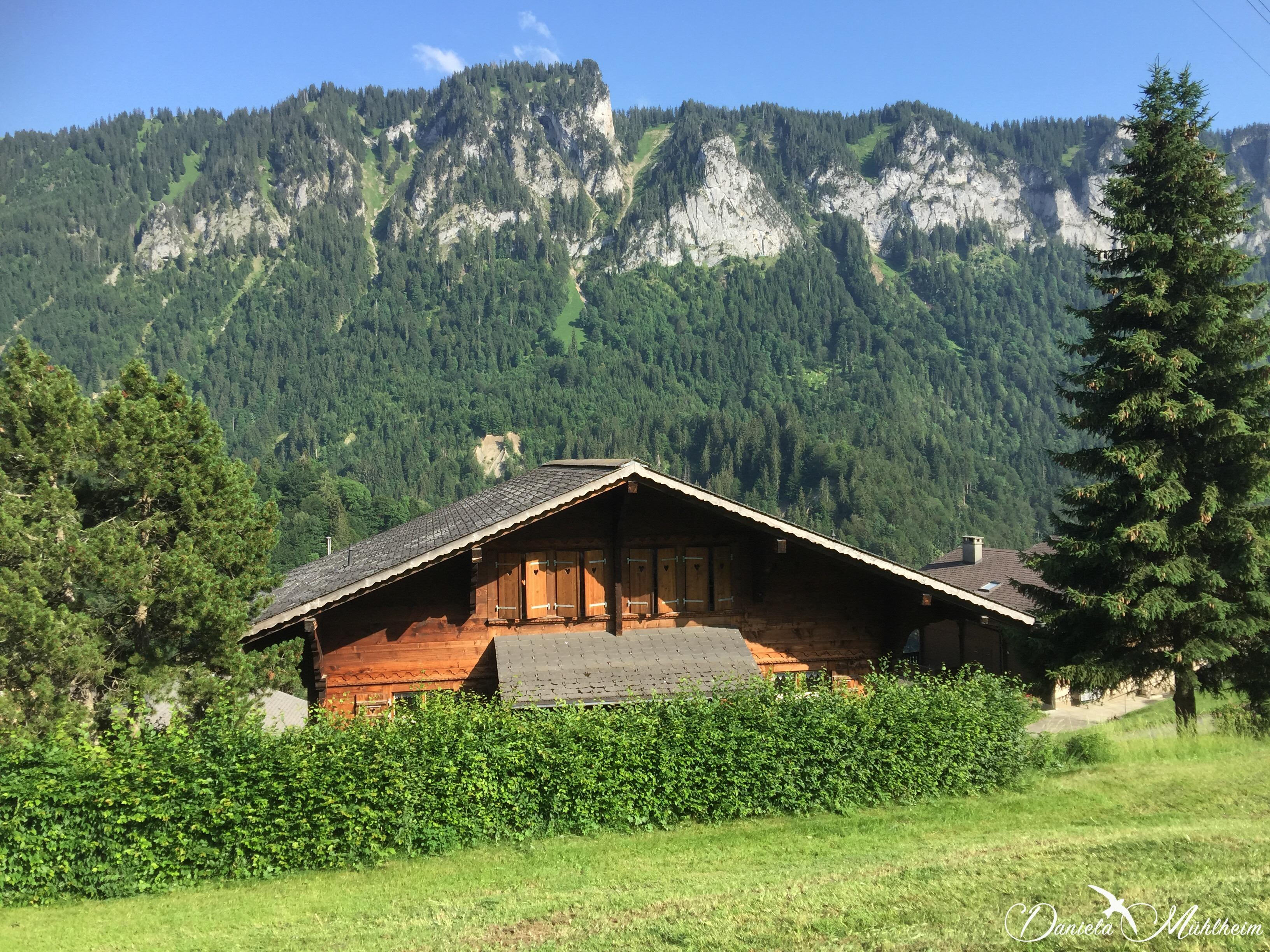 daniela, muehlheim, danielamühlheim, ladybird, exploring, earth, abundance, Switzerland, Alps