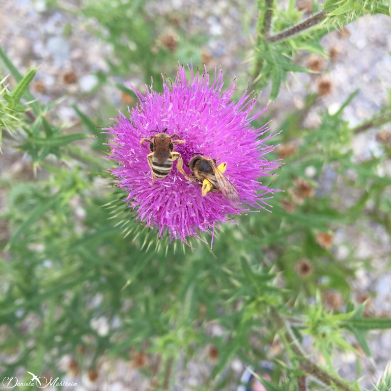 daniela, muehlheim, danielamühlheim, ladybird, exploring, earth, abundance, Switzerland, bee, insect
