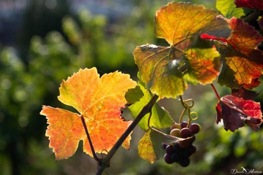 daniela, muehlheim, danielamühlheim, ladybird, exploring, earth, abundance, Switzerland, grapevines, vineyard