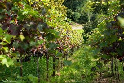 daniela, muehlheim, danielamühlheim, ladybird, exploring, earth, abundance, grapevines, vineyard