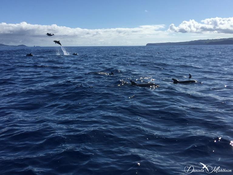 daniela, muehlheim, danielamühlheim, ladybird, exploring, earth, abundance, Azores, Pico, ocean, dolphin