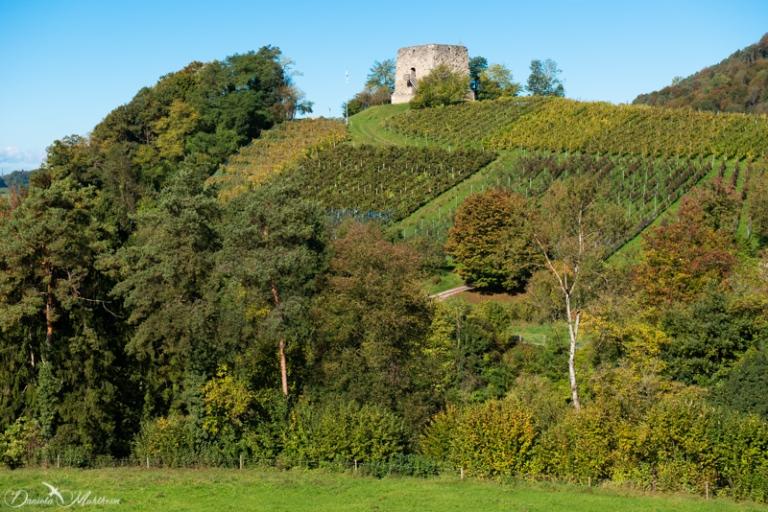 daniela, muehlheim, danielamühlheim, ladybird, exploring, earth, abundance, vineyard, grapevines