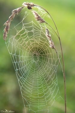 daniela, muehlheim, danielamühlheim, ladybird, exploring, earth, abundance, vineyard, grapevines, spiderweb
