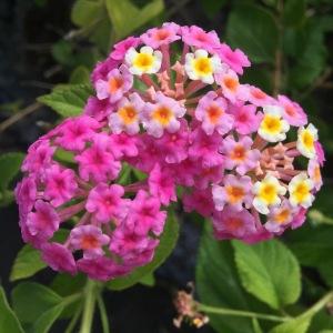 daniela, muehlheim, danielamühlheim, ladybird, exploring, earth, abundance,