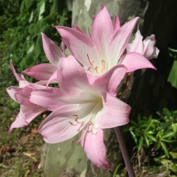 daniela, muehlheim, danielamühlheim, ladybird, exploring, earth, abundance, flower, Azores