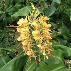 daniela, muehlheim, danielamühlheim, ladybird, exploring, earth, abundance, flower